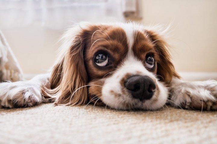 Avantages de souscrire une assurance pour chien
