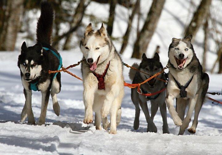 Zoom sur les activités nature en compagnie de ses chiens