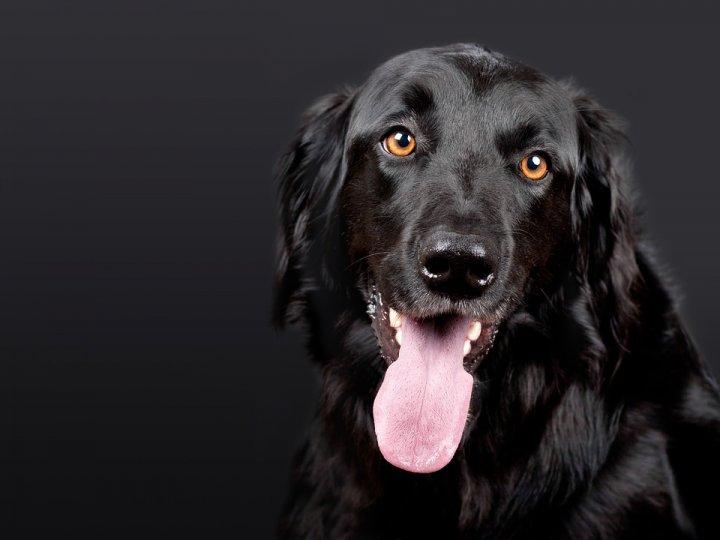 Informations autour de la mutuelle pour chien